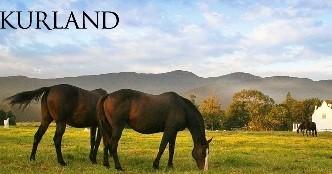 kurland2